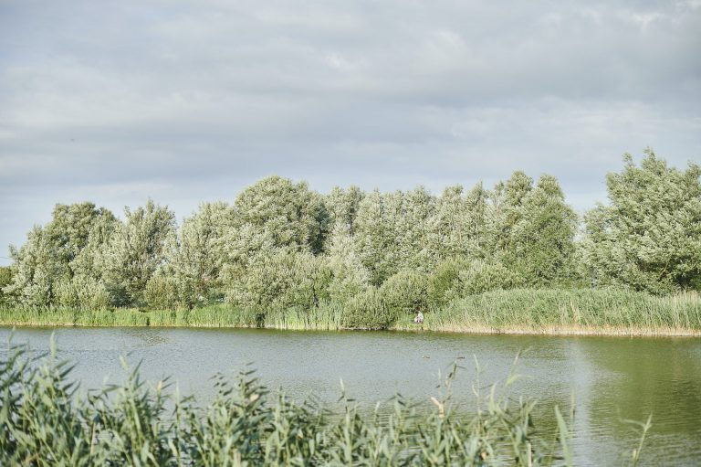Fishing pond - De Lombarde
